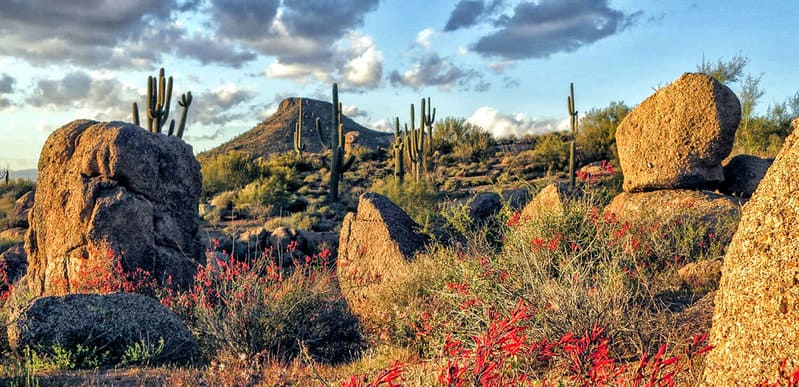 The Top 10 Things to Do in Scottsdale Arizona